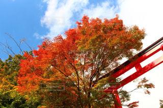 秋はすぐそこの写真・画像素材[862623]