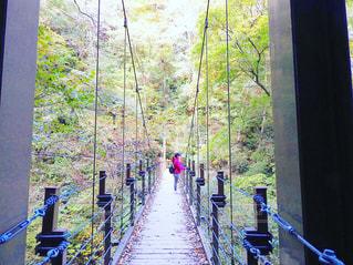 高尾山4号路の写真・画像素材[862624]