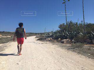 ランペドゥーザ島、サボテン、イタリアの写真・画像素材[621516]