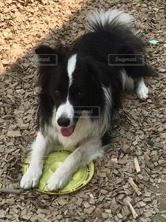 犬の写真・画像素材[640837]