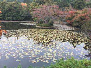 木々 に囲まれた湖の写真・画像素材[757272]