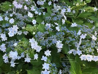 庭園の緑の植物の写真・画像素材[1321289]