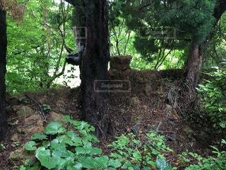 フォレスト内のツリーの写真・画像素材[1325368]