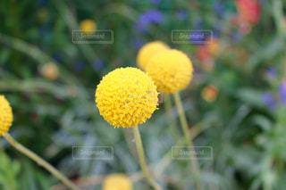 花の写真・画像素材[621241]