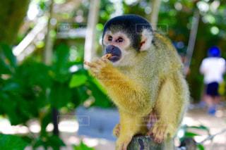 猿の写真・画像素材[622203]