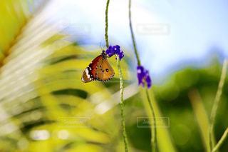 花の写真・画像素材[622208]