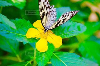 花の写真・画像素材[622213]