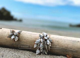 海の写真・画像素材[681719]