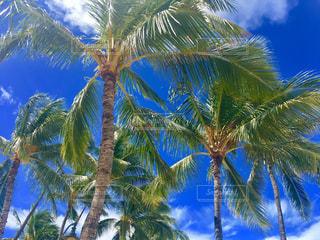 ハワイの写真・画像素材[621609]