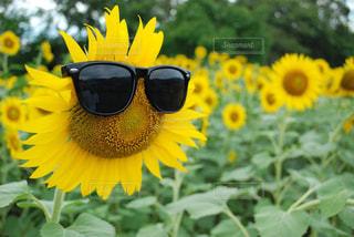 夏の写真・画像素材[621860]
