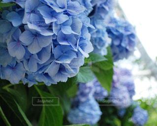 花の写真・画像素材[621880]