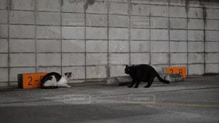 猫の写真・画像素材[622195]