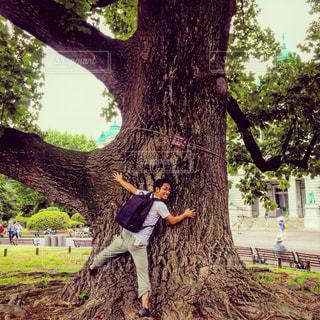 大木に抱きつく男の写真・画像素材[682205]