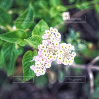近くの花のアップの写真・画像素材[889762]