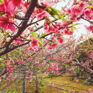 近くに果物の木のアップの写真・画像素材[1076092]