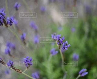 植物の紫色の花 - No.1076097