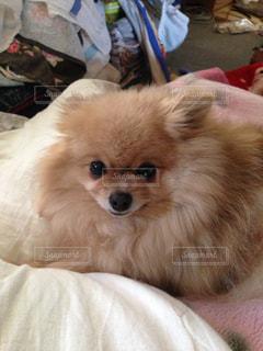 犬の写真・画像素材[623410]