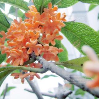 花の写真・画像素材[622327]