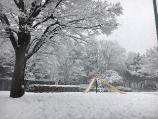 雪の日の公園の写真・画像素材[1012487]