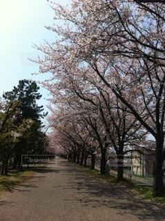 春の写真・画像素材[104520]