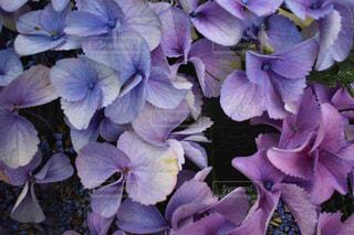 花の写真・画像素材[622595]