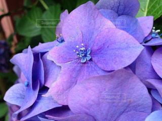 花の写真・画像素材[657191]