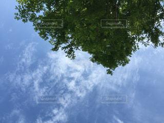 空の写真・画像素材[657292]