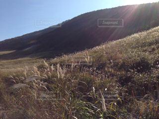 箱根仙石原のススキの写真・画像素材[725233]