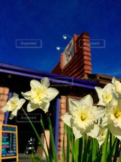 Flowerの写真・画像素材[638744]