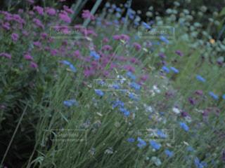 花の写真・画像素材[625794]