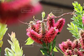 花の写真・画像素材[623248]