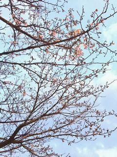 春 - No.623167