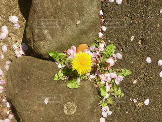 春の写真・画像素材[626774]