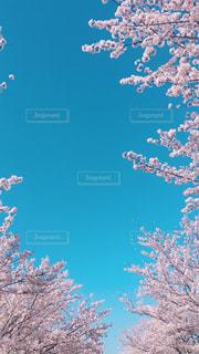 近くの木のアップの写真・画像素材[1102903]