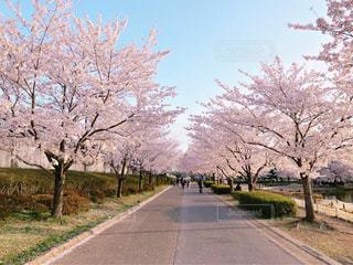道の端に木の写真・画像素材[1375846]