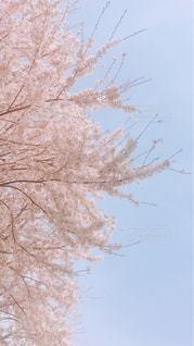 近くの木のアップの写真・画像素材[1375847]