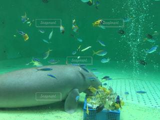 No.623725 魚