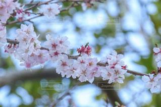 近くの花のアップの写真・画像素材[1119700]
