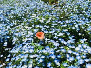 近くの花のアップの写真・画像素材[1125348]