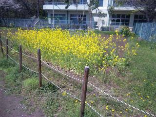 植物 - No.623464
