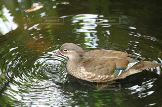 鳥の写真・画像素材[623375]