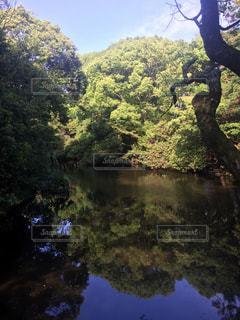 池 静寂の写真・画像素材[623445]