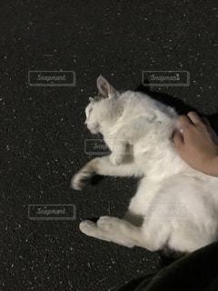 猫の写真・画像素材[623529]