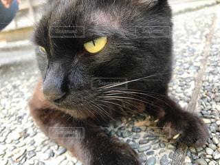 猫の写真・画像素材[623576]