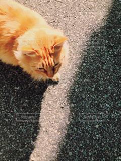 猫の写真・画像素材[630890]