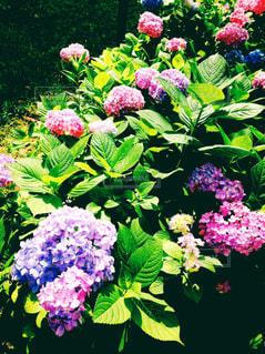 花の写真・画像素材[630927]