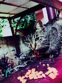 猫の写真・画像素材[630953]