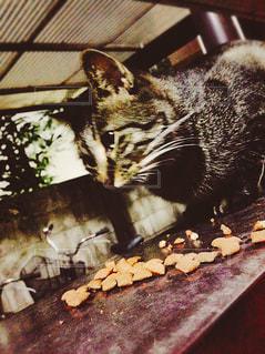 猫の写真・画像素材[630974]