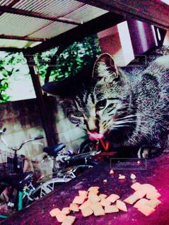 猫の写真・画像素材[630978]