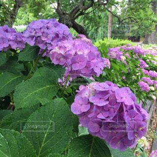 庭の写真・画像素材[623754]